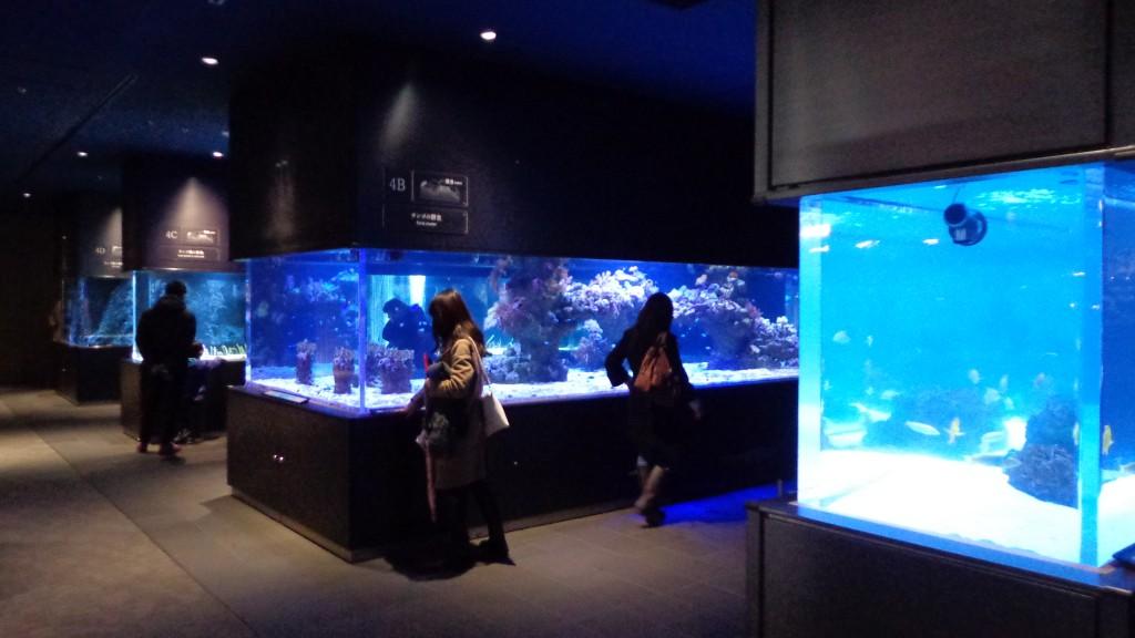 Sumida aquarium with tokyo skytree the tokyo skytree for Aquarium shop